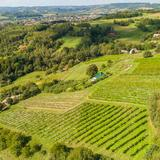 Image: Stec family Vineyard